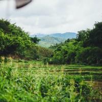 Plantation http://barnimages.com/